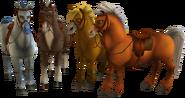 Horses (Starstable)
