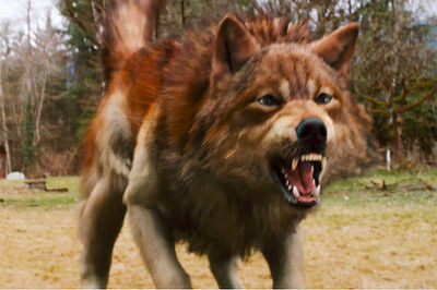 Jacob Black Werewolf form