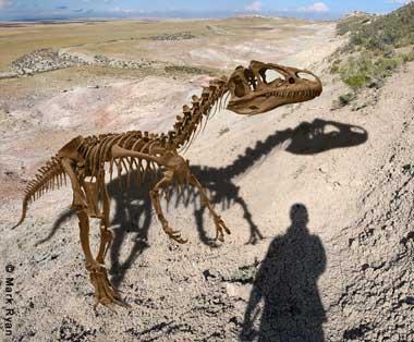 File:Allosaurus-dinosaur-fossil.jpg
