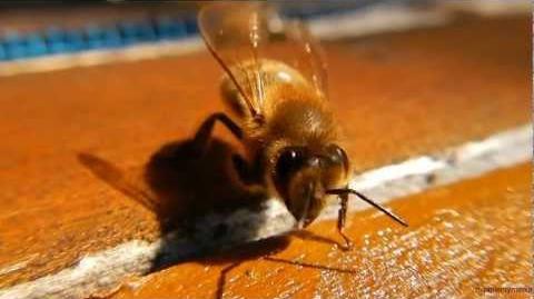 Super Cute Bee )