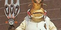 Chef Bug
