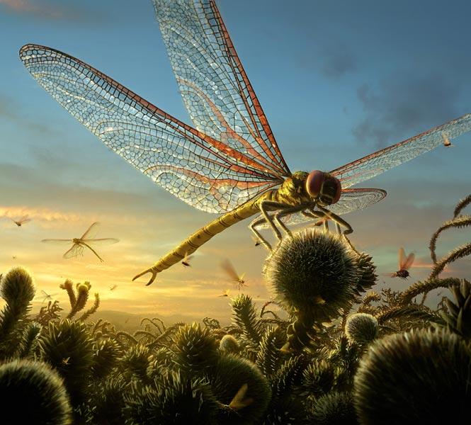 Carboniferous Period Spider Carboniferous Period 355 299