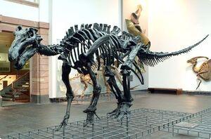 IguanodonSkeleton