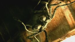 primeval giant spiders