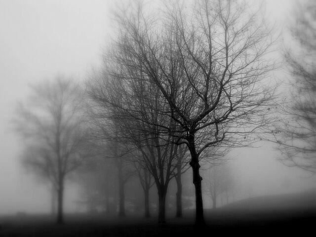 File:Greyday.jpg