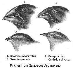 File:'s finches.jpeg