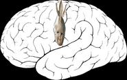 Homunculus sensory