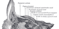 Carotid canal