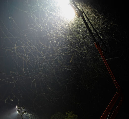 File:Moths attracted by floodlight02.jpg