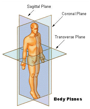 File:BodyPlanes.jpg