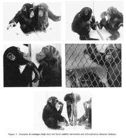 Povinelli (1993) pictures
