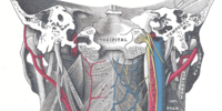 Pharyngeal plexus of vagus nerve