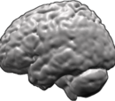List of regions in the human brain