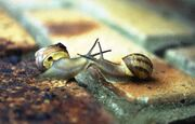 Kissingsnails