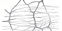 Auerbach's plexus
