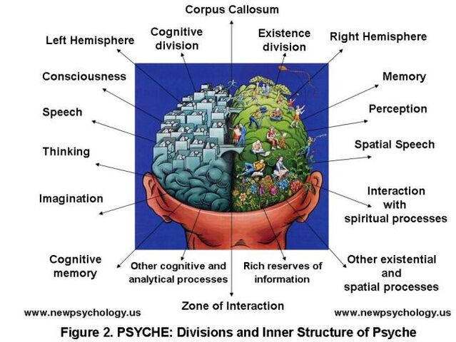 File:Determination and Study of Psyche in the Brain.jpg