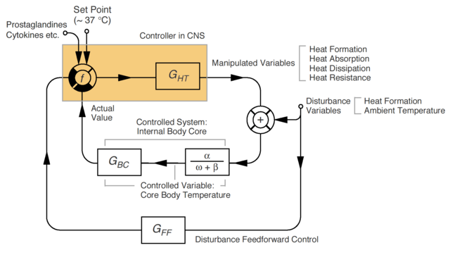 File:Thermoregulation simplified.png