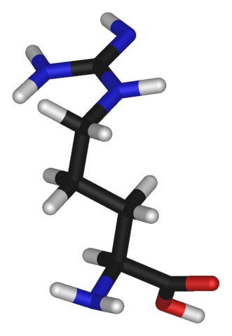 File:L-arginine-3D-sticks-(tall).png