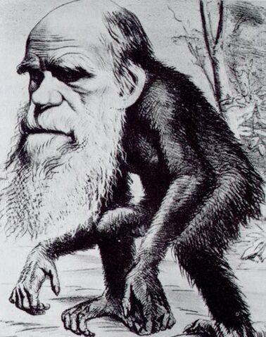 File:Darwin ape.jpg