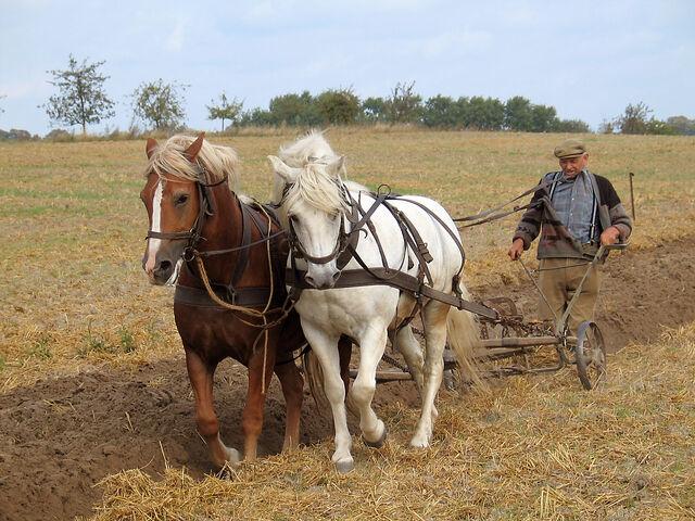 File:Farmer plowing.jpg