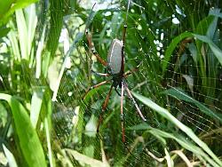 File:Spider01250.jpg