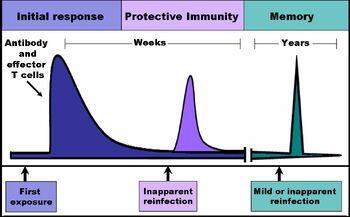 Immune response