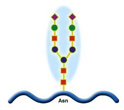 Glicoprotein