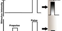 Prepulse inhibition