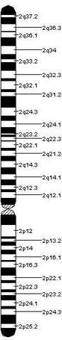 File:Chromosome 2.jpeg