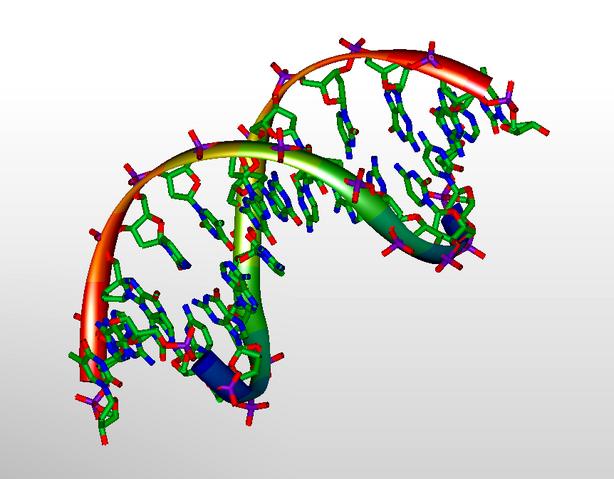 File:DNA 3D Model.png