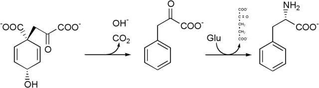 File:Phenylalanine biosynthesis.png
