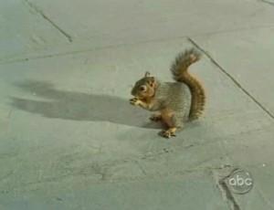 104squirrel