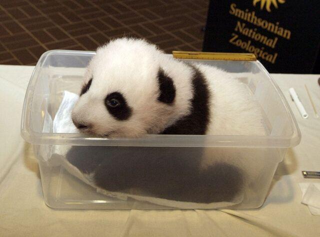 File:Tab panda.jpg