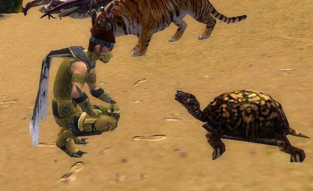 File:Turtle Stare Contest LoD.jpg