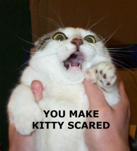 File:Youmakekittyscared.JPG