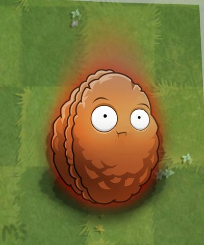 GrassMeteorNut