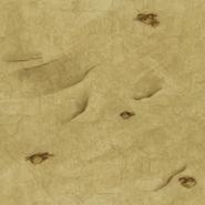 Earthen Floor texture