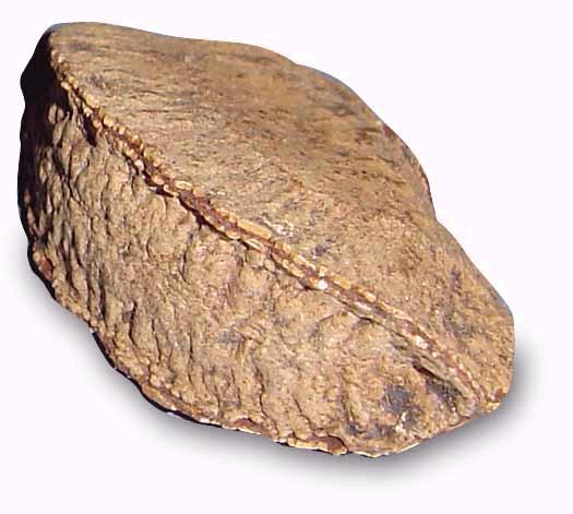 File:Brazil nut.jpg