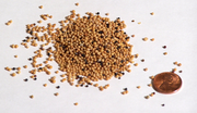 File:Mustarseeds.png