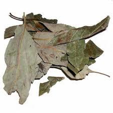 File:Avocado leaves.jpg