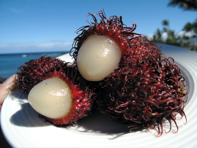 Rambutan Recipes Wiki Fandom Powered By Wikia