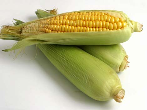 File:Corn1.jpg