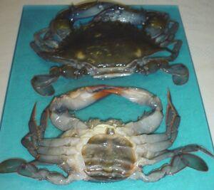 Soft-ShellCrab