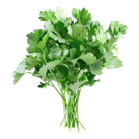 File:Parsley3.jpg