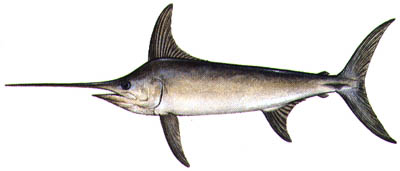 File:Swordfish.jpg