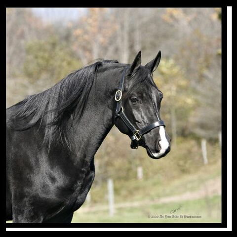 File:Horse 1.jpg