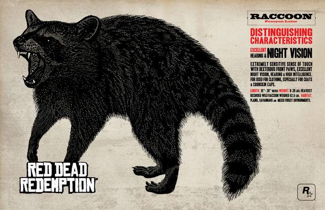 File:Raccoon.jpg