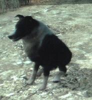 Rdr perro