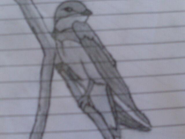 File:Swiftwing.JPG