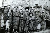 190px-Auschwitz Liberated January 1945